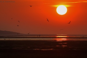 Sonnenuntergang_Sommerhage